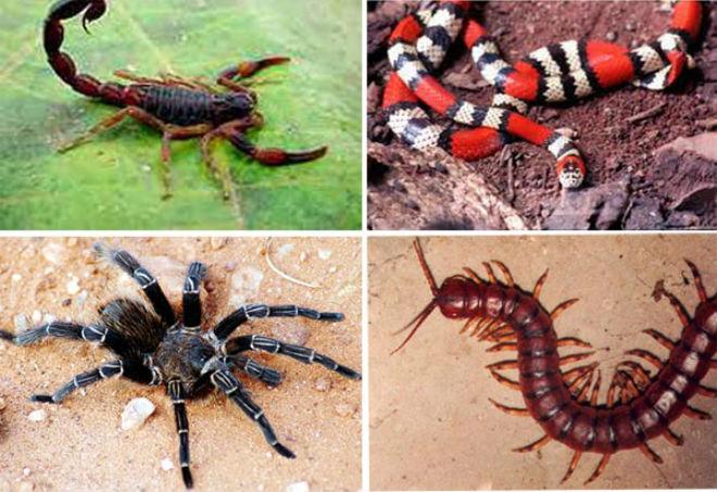 CUIDADOS – Secretaria de Saúde alerta para acidentes com animais peçonhentos