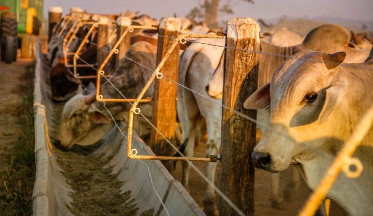 Idaron muda perfil exportador de Rondônia e almeja a condição de livre de febre aftosa sem vacinação