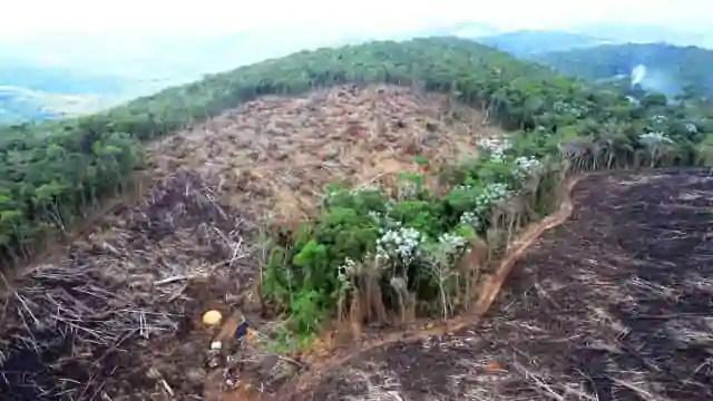 Alemanha suspende financiamento a projetos de conservação na Amazônia