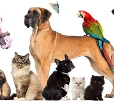 Iniciado novo cadastro para castração de animais domésticos