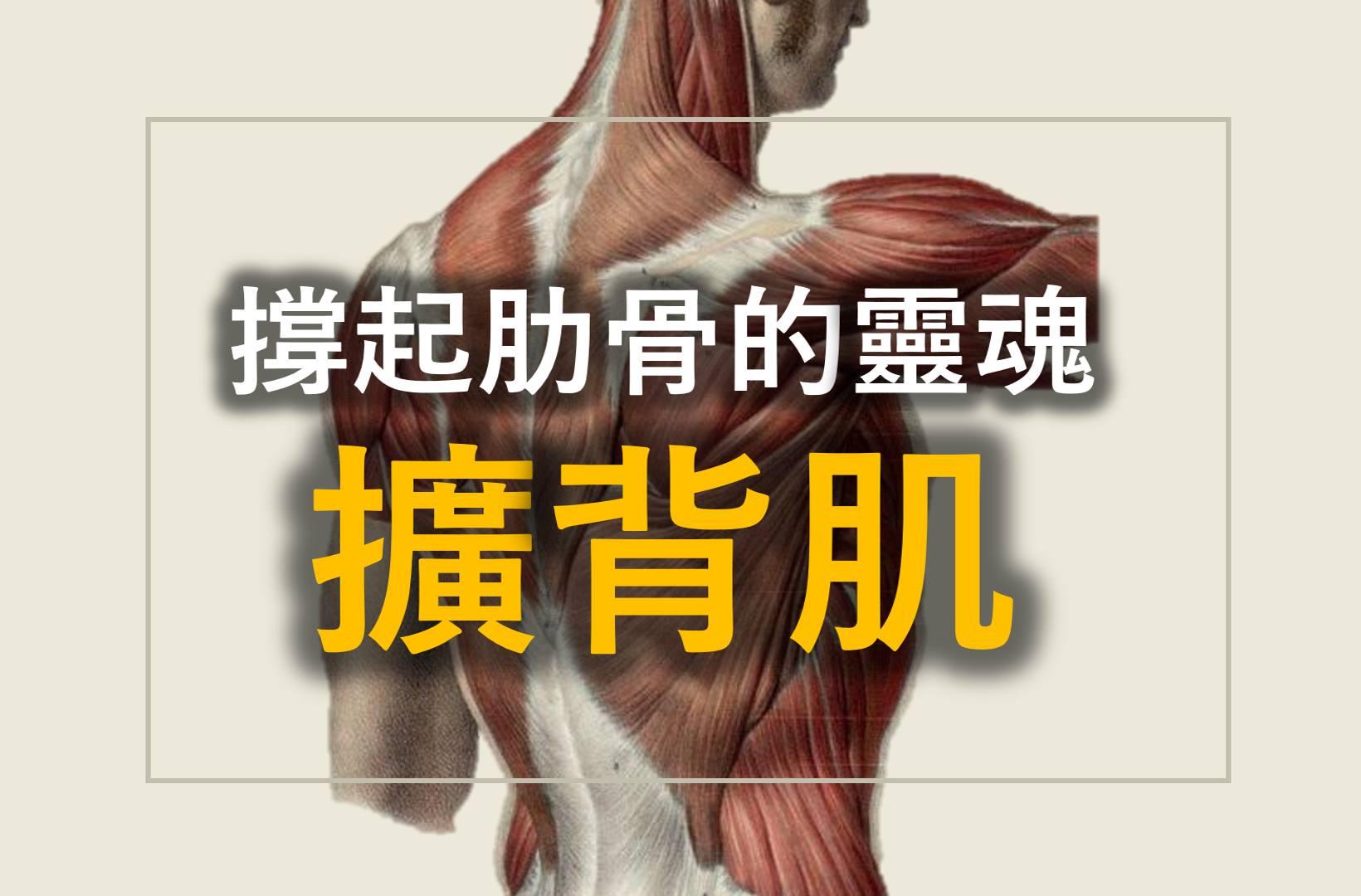 擴背肌latissimus dorsi anatomy