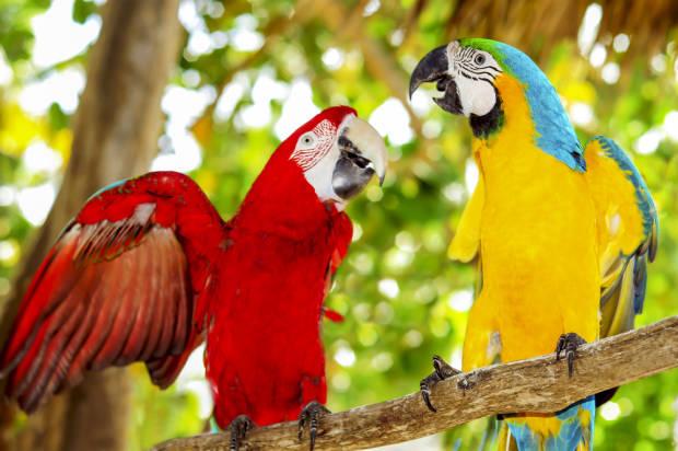 Birds  Johns Hopkins University Press Blog