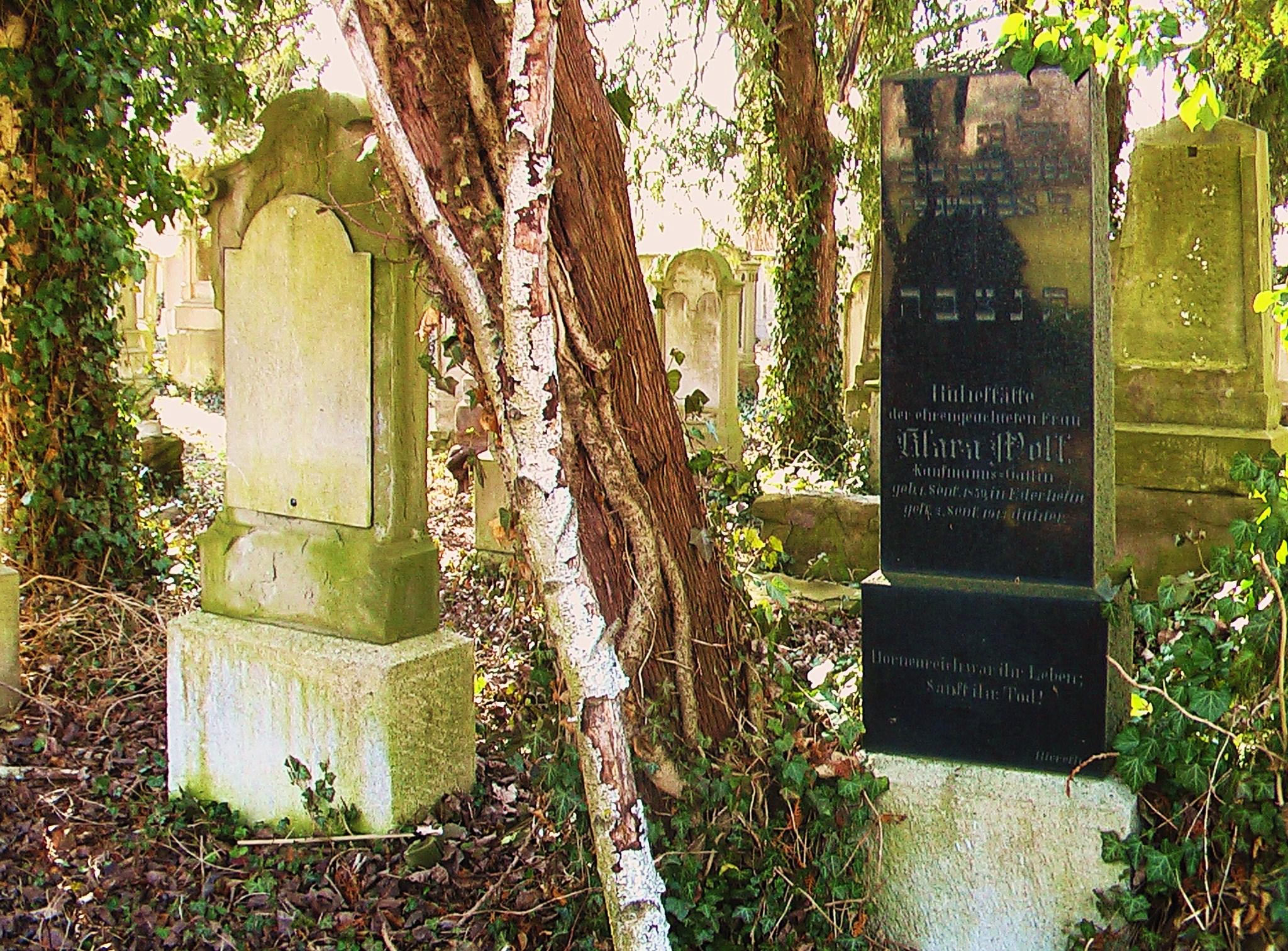Mysteriöser Birkenast am Jüdischen Friedhof Kriegshaber