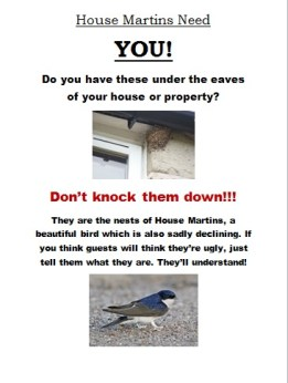 House Martins Need You!!!