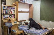 A man and his dog relax at home. Dogs, which are considered unclean and so are not often kept as pets, are usually kept indoors by their owners.