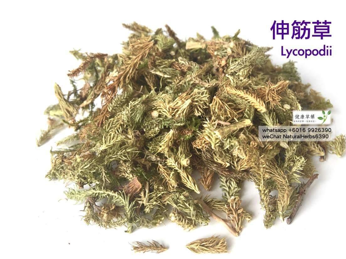 【舒筋強骨】伸筋草 Lycopodii