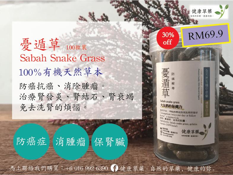 沙巴蛇草 憂遁草Sabah Snake Grass – Belajai Gajah