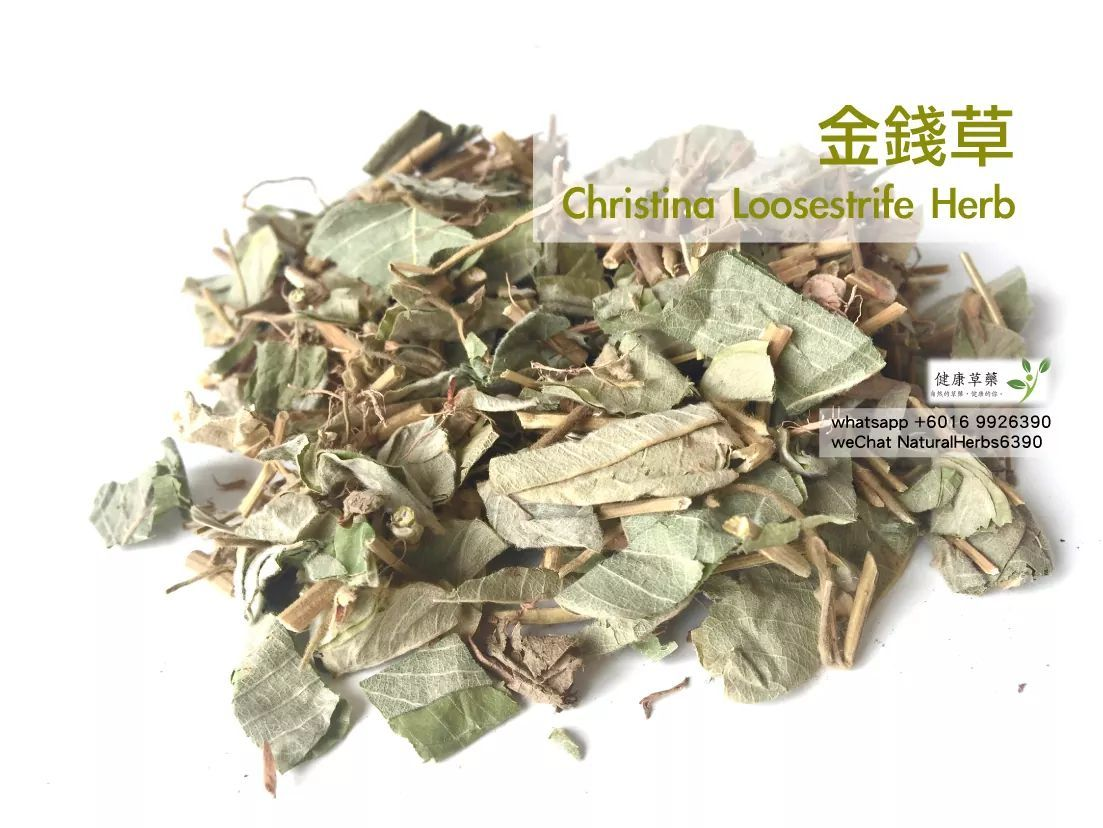 【結石溶解劑】金錢草 Christina Loosestrife Herb