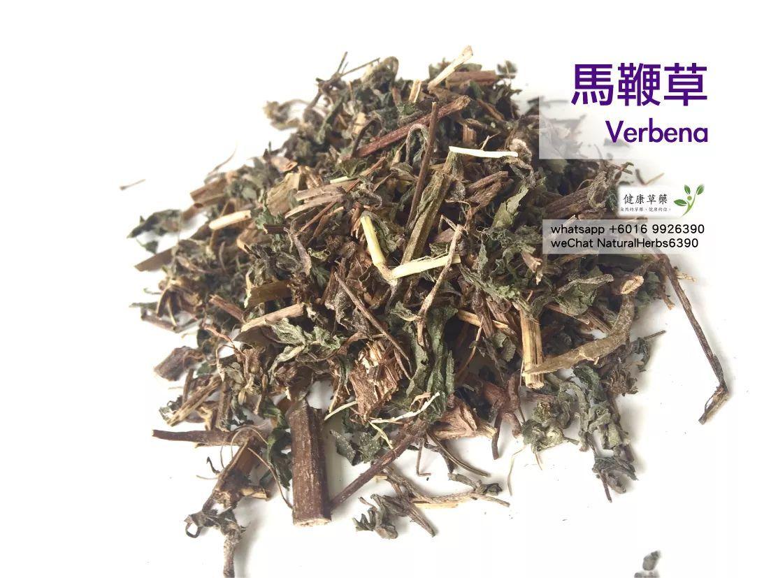 【瘦身减肥 x 活血化淤】馬鞭草 Verbena