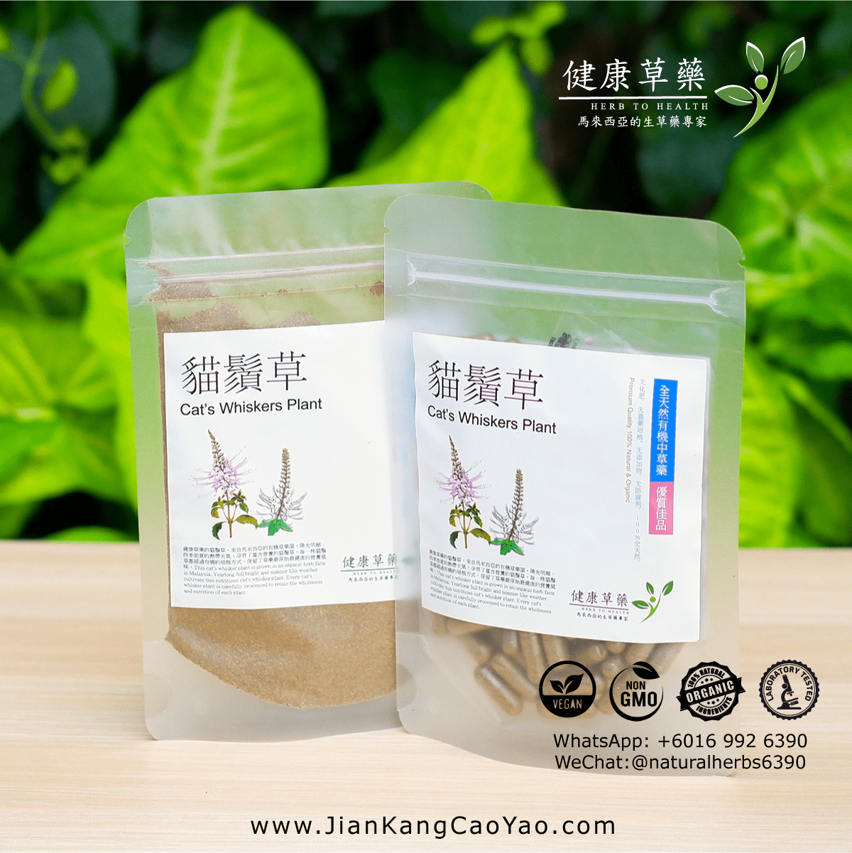 貓鬚草 Cat's Whiskers Plant – Misai Kucing