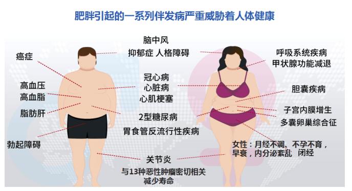 肥胖就是一切疾病的根源 了解脂肪 認識 減肥草藥
