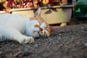 猫,睡眠,寝る