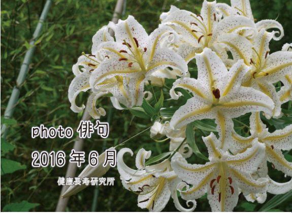 photo俳句(6月投稿分)