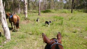 In the bush, you rarely have anything other than a barbed wire fence to tie your horse to. These aren't high-strung show ponies, they know what to do.