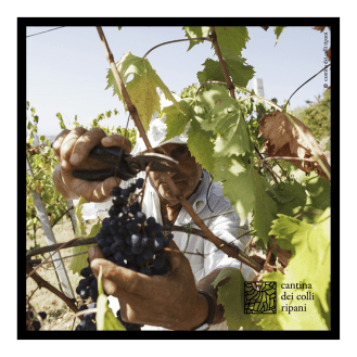 ccr_post_vendemmia_2