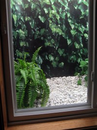 "All about my ""ivy"" window well & how I did it"