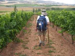 Walking through a vineyard in Rioja by photographer Jill K H Geoffrion