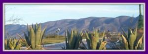 mountain view Saltillo, Coahuila