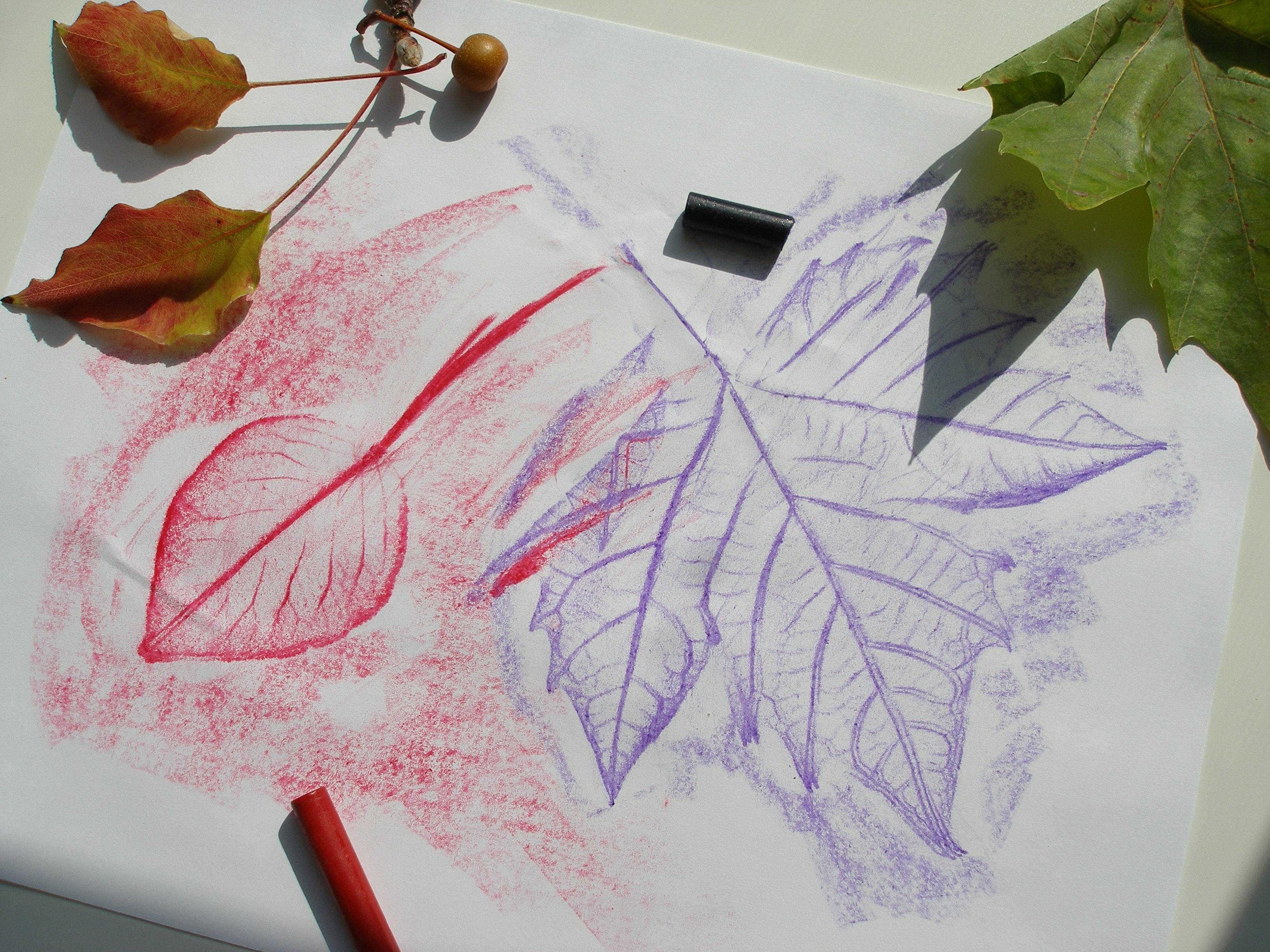 Autumn Lesson Leaf Rubbings