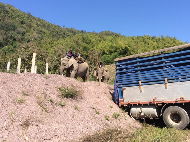 Elephants about to be loaded on to truck