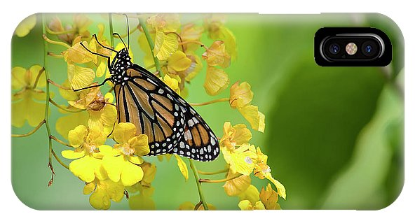 Monarch Butterfly on Orchids Phone