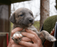 puppy low res 2
