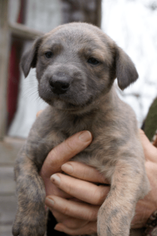 puppy low res 6
