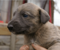 puppy low res 7