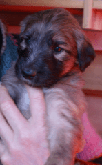 puppy low res 8