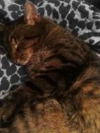 Tiger-asleep
