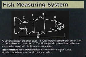 fish measuring chart
