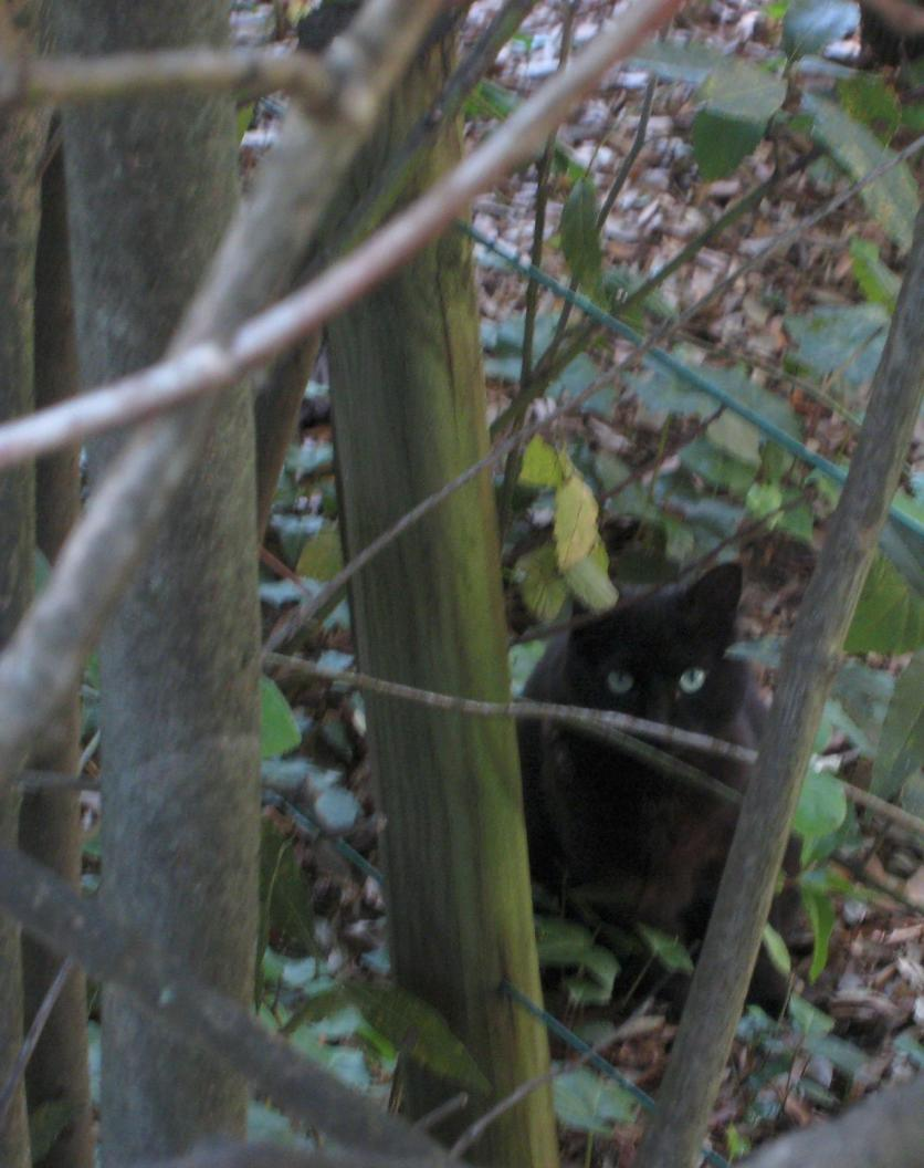 1228 Cat in the Bushes