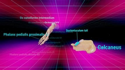 VRAnatomy4