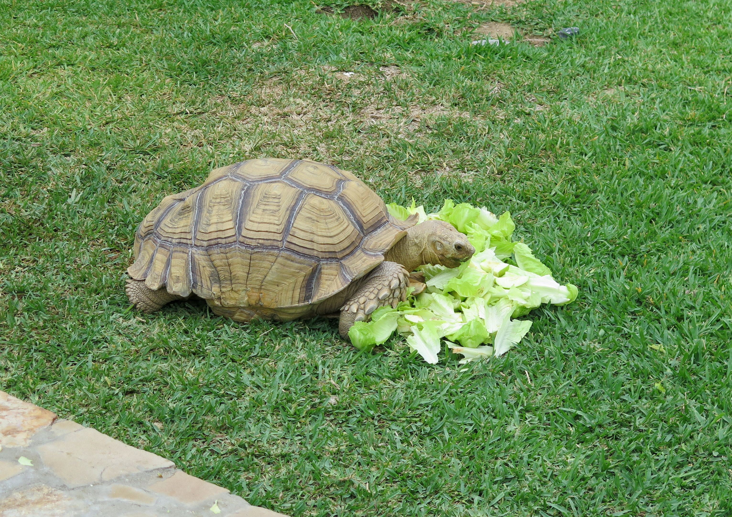 Priscilla the tortoise is a key staff member at One&Only Palmilla. Definitely a big attraction for the kids.