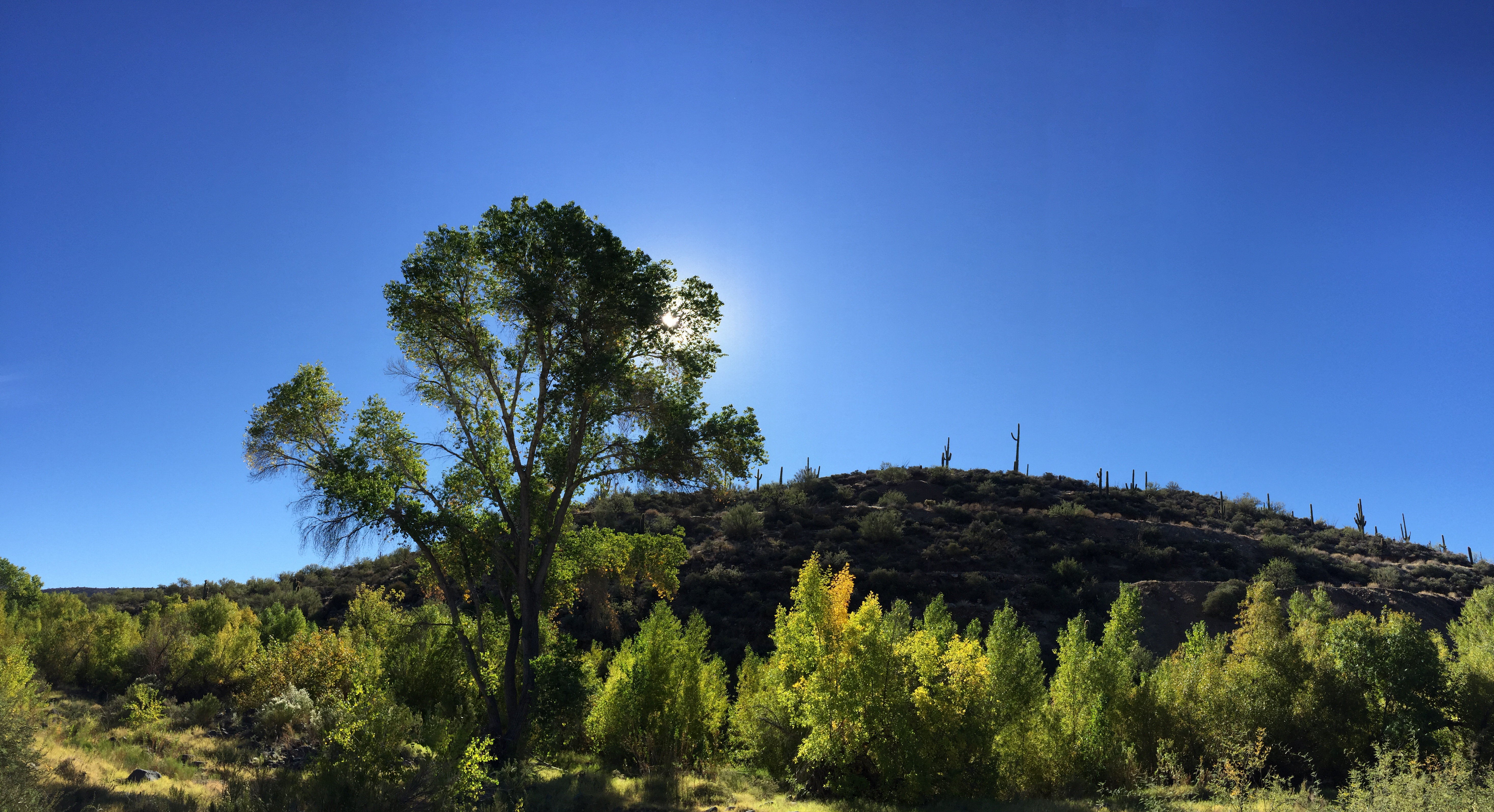 Try a hike at the Spur Cross Recreation Area in north Scottsdale for a huge treat. - JIM BYERS PHOTO