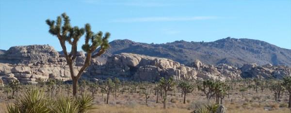 foothill eagle's library desert