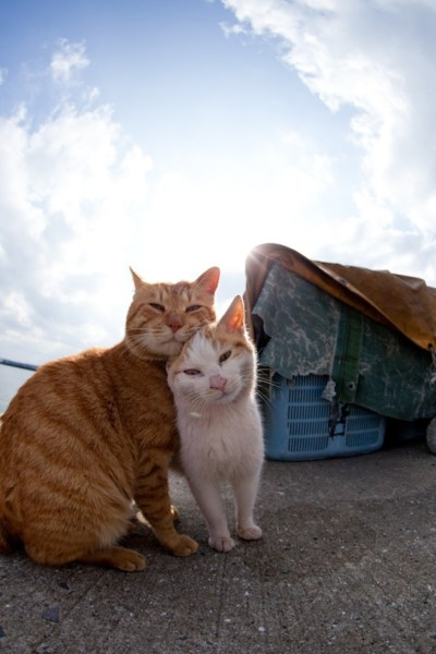 """Just Another Day on """"Cat Island"""" : A Repost from Fubirai ..."""
