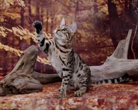 cat-portraits-pet-photography-11