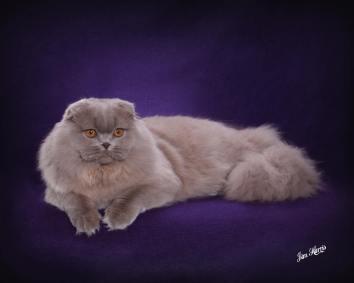 cat-portraits-pet-photography-5