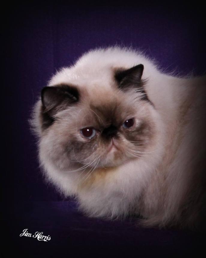 cat-portraits-pet-photography-6