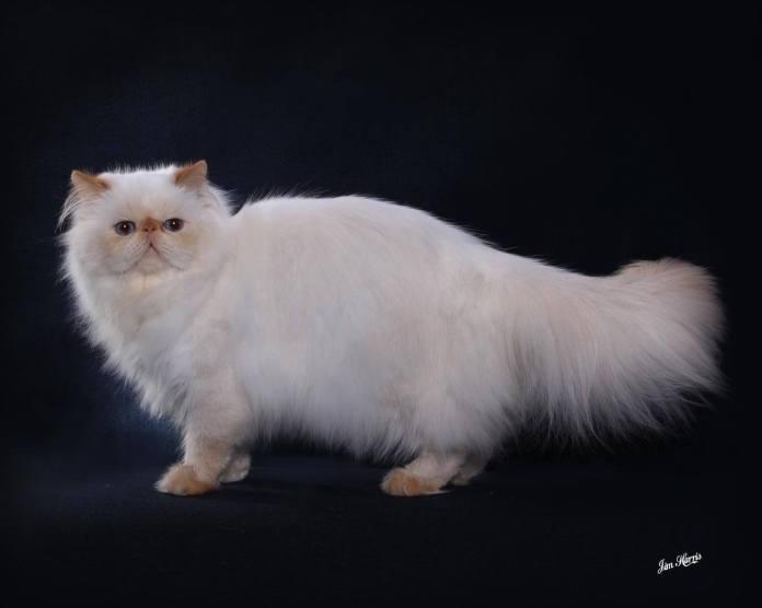 cat-portraits-pet-photography-7