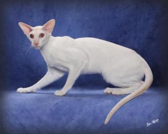 cat-portraits-pet-photography-9
