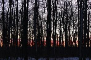 sunset-through-trees_16116882650_o