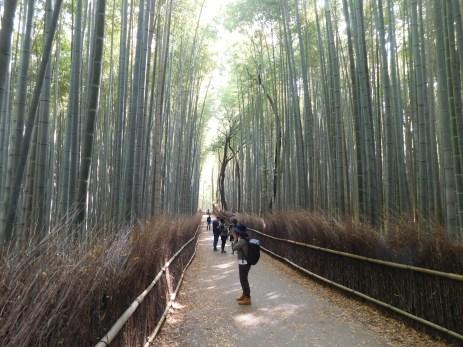 The bamboo grove entrance to the Arashiami garden.