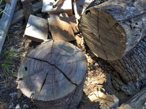 photo of cut log