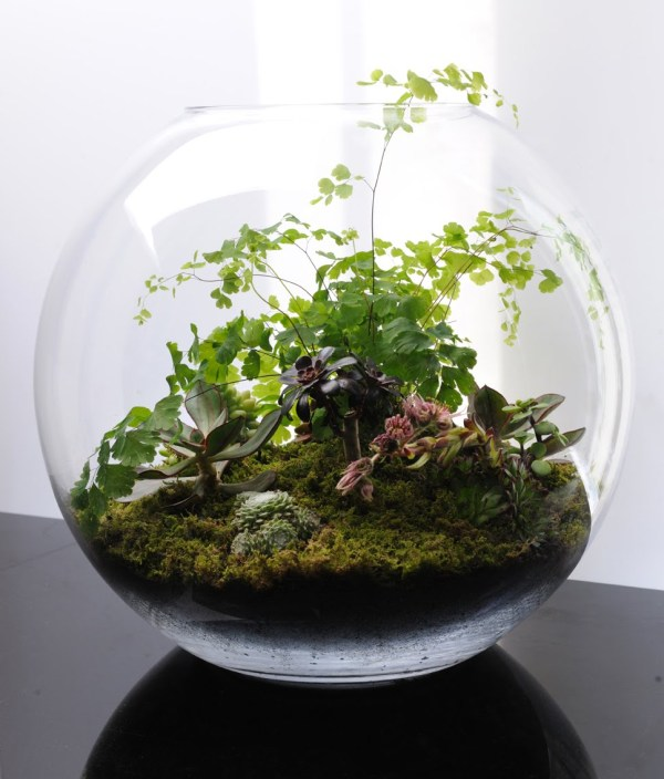 terrariums fish bowl gardening