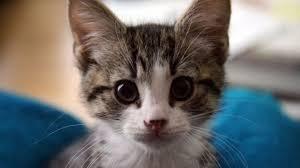 embassy-cat