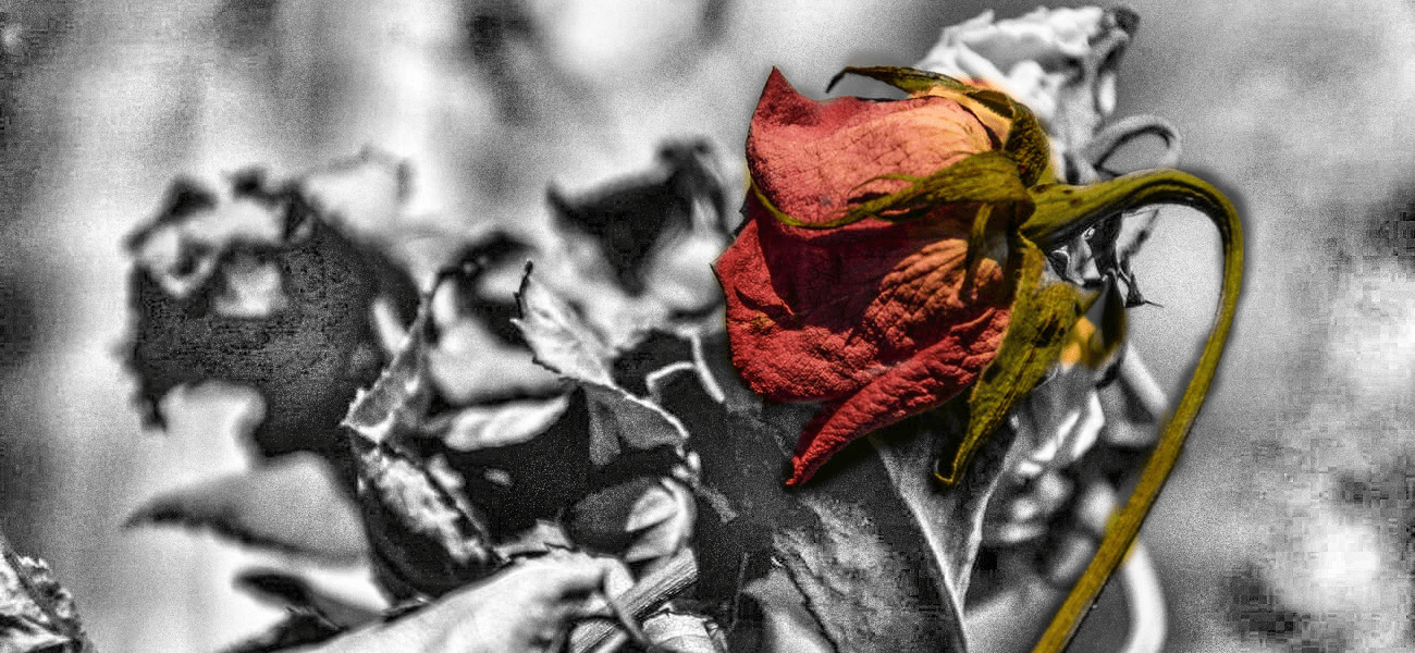 Grief - Wilted Rose