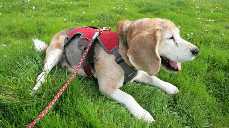 Remembering Beagle Bailey (test post)