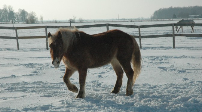 Horses in Winter 2011